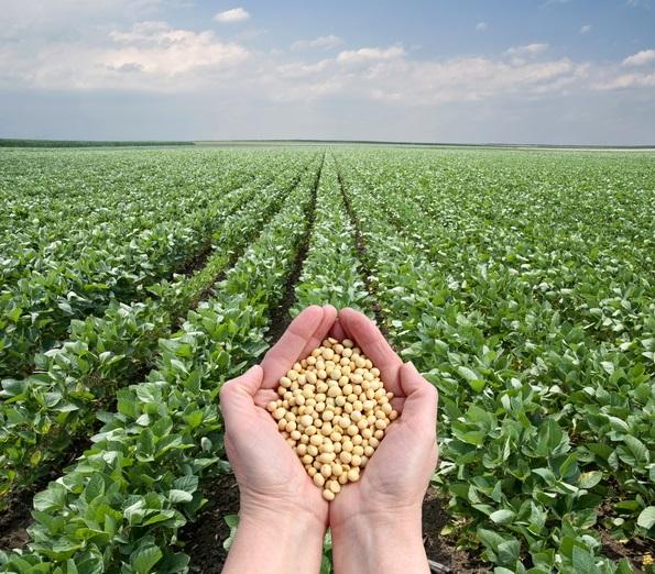 Kredyt na zakup rzeczowych obrotowych środków do produkcji rolnej